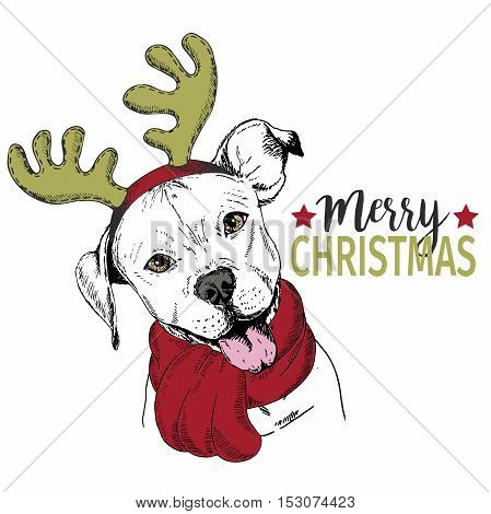 Vector portrait of Christmas dog. Pit bull dog wearing deer horn rim and scarf. Christmas poster flyer greeting card holiday celebration party pet shop shelter pharmacy decoration.