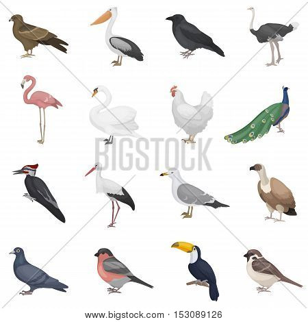 Bird set icons in cartoon style. Big collection bird vector symbol stock