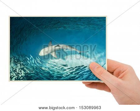 Hand and shark image (my photo) isolated on white background
