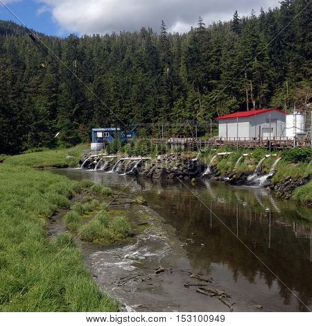 Scene Of Salmon Hatchery And Creek Near Ketchikan, Alaska.