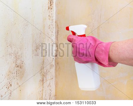 Killing Of Mold On Room Wall With Chemical Spray