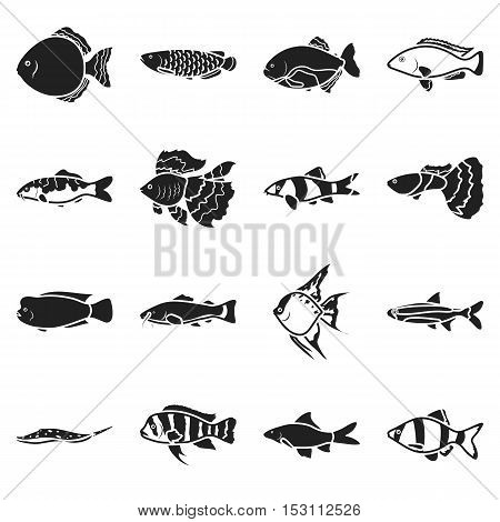 Aquarium fish set icons in black style. Big collection aquarium fish vector symbol stock