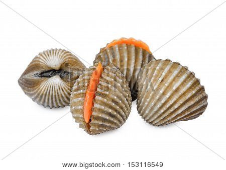 fresh cockles seafood isolated on white background