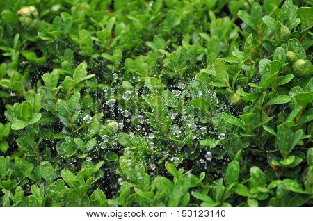 Rocío, primavera, invierno, naturaleza, gotas, agua, telaraña, hojas, planta.