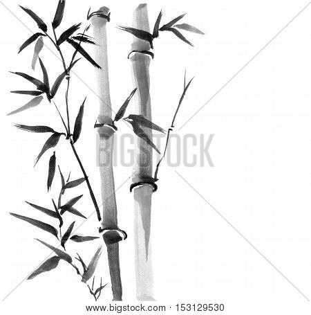 Bamboo trees hand drawn with ink in traditional Japanese painting style sumi-e.