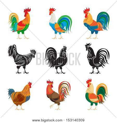 Roosters and rooster silhouettes isolated on white background. Chickens farm cockerel set vector illustration
