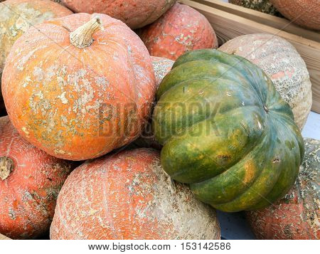 Pile of giant pumpkins