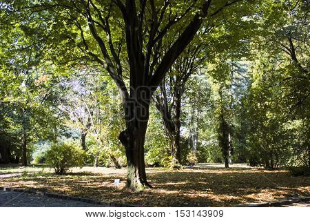 Tree park forest nature landscape green sunlight background Sofiyevsky park.