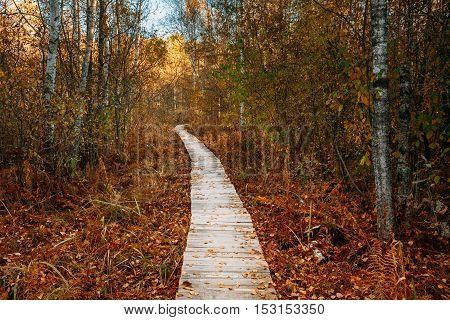 Wooden boarding path way pathway in autumn forest near bog marsh.