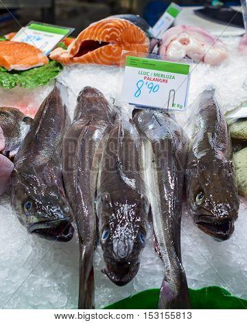 hakes in the market of la boqueria