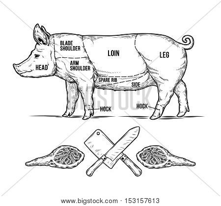 Vector illustration of a pig is made in the style of engraving