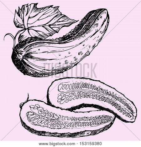 Pieces half cucumber doodle style sketch illustration hand drawn vector