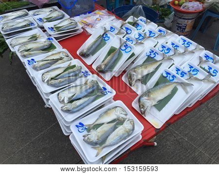 CHIANG RAI THAILAND - OCTOBER 11 : Steamed thai mackerel fish (pla tu) for sale in plastic wrapped in Thai market on October 11 2016 in Chiang rai Thailand.