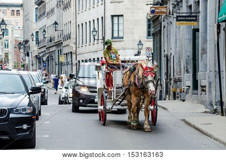 Montreal, Canada - July 26, 2014: Tour guide on road in horse carriage buggy in old town city