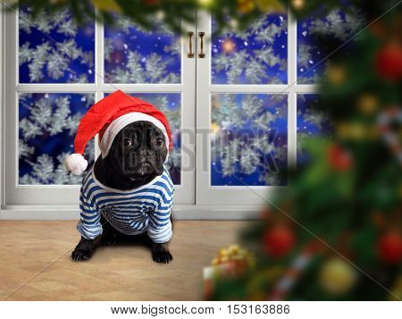 Funny Dog in a New Year's red cap and a striped vest. Dog sitting on the sill of a window. Outside the window the snow. Christmas tree New Year's Eve. Christmas