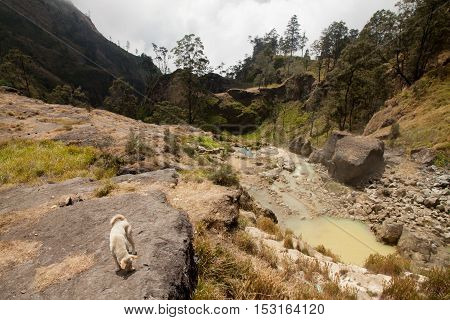 Hot springs with yellow water near Mount Rinjani volcano, Lombok, Indonesia