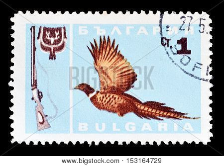 BULGARIA - CIRCA 1967 : Cancelled postage stamp printed by Bulgaria, that shows Ringnecked Pheasant.