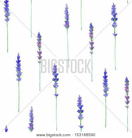 Lavanda flowers.Floral seamless pattern.Watercolor hand drawn illustration.White background.