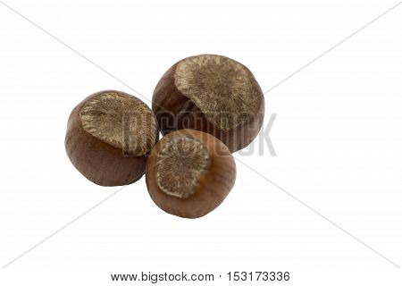 Hazelnut. Hazelnuts isolated on white. Three hazelnuts. Healthy hazelnuts.