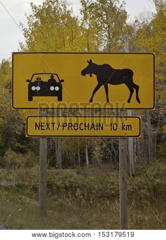 Vertical yellow warning highway sign of a moose crossing towards a car with autumn foliage in the background near Miramichi NB on a slightly overcast but bright day in October.