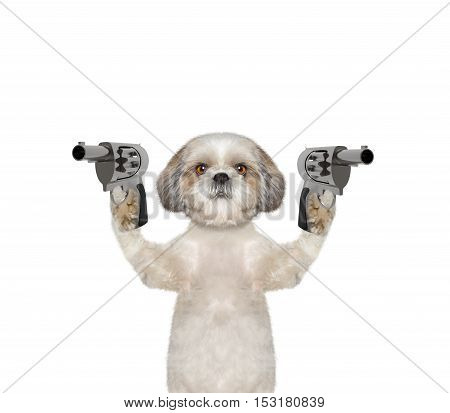 Dog with guns is murderer - isolated on white