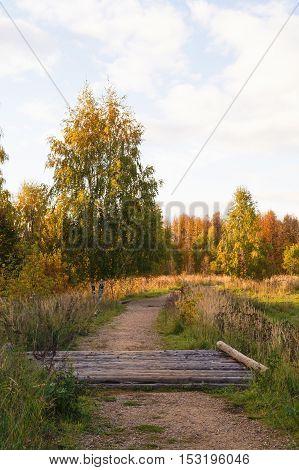 Pathway through the autumn forest sun landscape