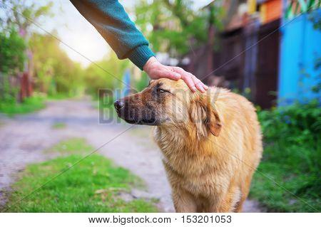 Man caresses a dog hand. Dog breeding composition