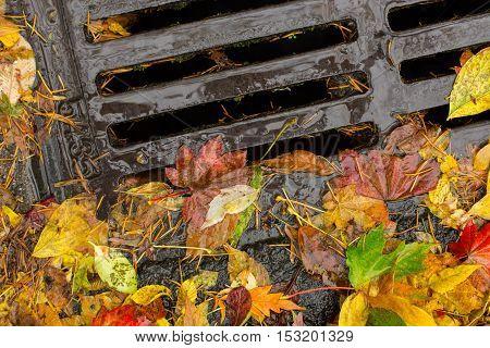 Multi colored leaves clogging a street drain