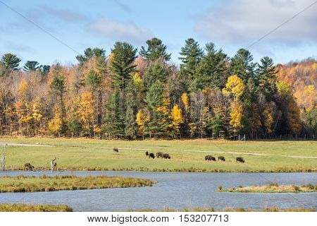 A colourful forest scene in the fall season