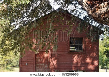 abandoned red barn in shade under Spanish moss tree