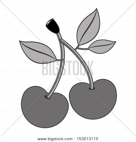 cherry fruit healthy food over white background. vector illustration