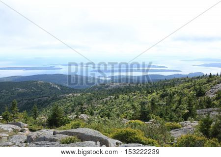 Pine tree view of Cadillac Mountain in Maine.