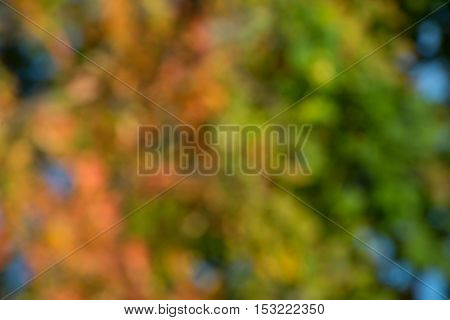 Autumn abstract colorful blurred background bokeh effect