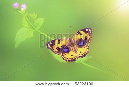 beautiful butterfly sitting on plant and sunshine