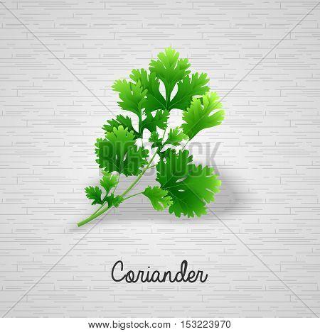 Illustration of  Fresh green leaves coriander background