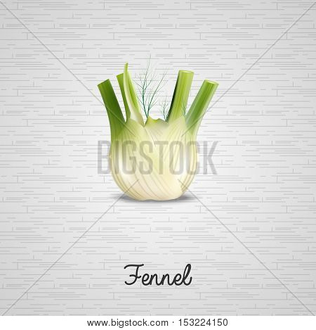 Illustration of  Fresh fennel illustration on white background