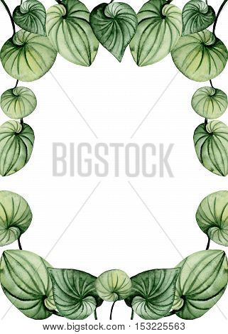 Herbal Frame with Watercolor Fresh Green Leaves and Place for Text