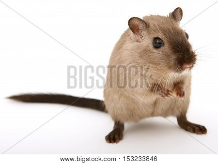 a picture of a cute mouse. and mouse can be cute and friendly