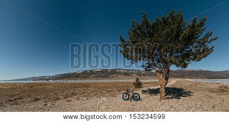 Fatbike also called fat bike or fat-tire bike - Cycling on large wheels. Bike stands on the shore of the lake, amid picturesque frozen Lake Baikal and a huge pine tree.