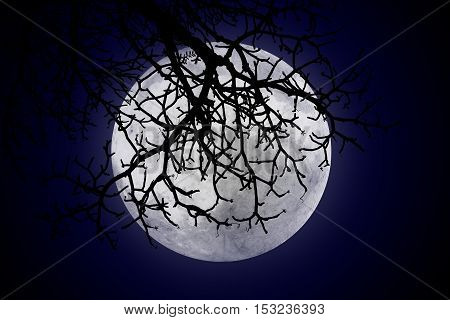 halloween or ghost style The moon is behind the shadows of twigs on empty dark sky at night
