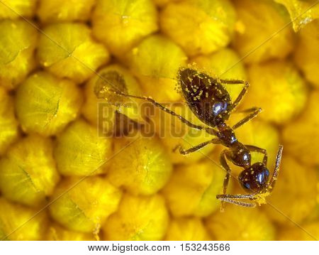 ant wiith stamens on flower. close up