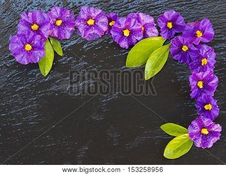 flower frame with free space to write on a stone background