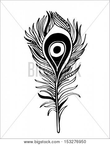 Boho hand drawn ornamental feather, line art, tribalinspired vector illustration. Peacock feather.