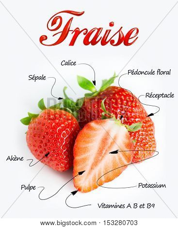 Macro shot on strawberries with detailed parts explanations in French. The texts say : strawberry, achene, calyx, flesh, epicalix, Vitamine C, steme,