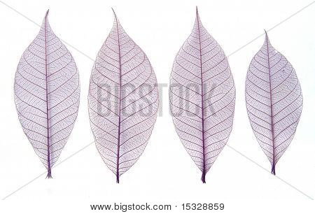 Skeleton leaves poster