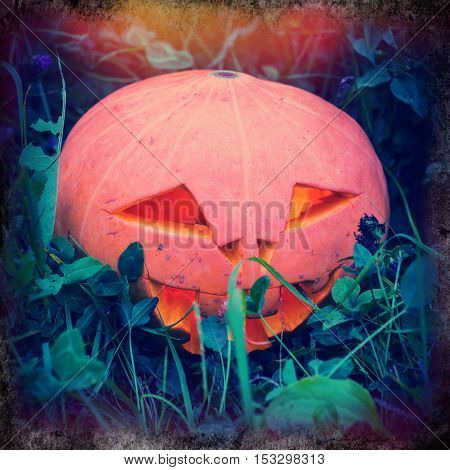 Halloween pumpkin on a stump in the evening on meadow