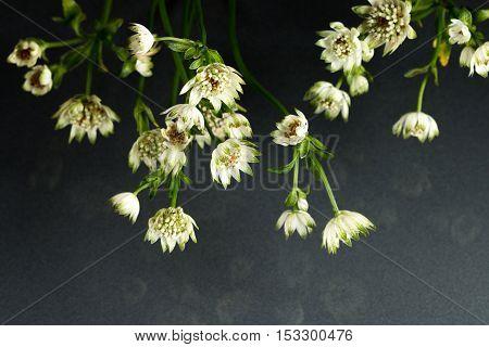 Flowers Of Wildlife Fantastic Beauty.
