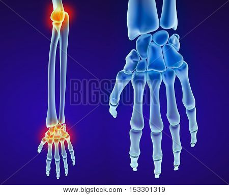 Human hand anatomy. Medically accurate 3D illustration