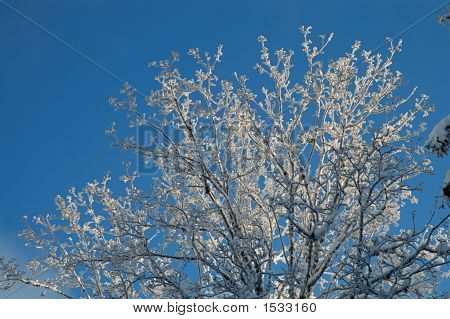 Sunny Branches