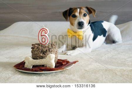 Treats for dog pet on his sixth birthday selective focus. Pet's treats.